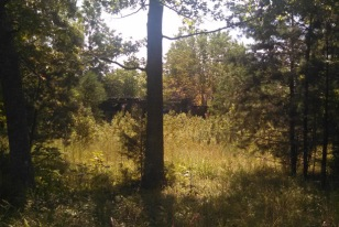 First view of the Blue Grass Park stage through the brush